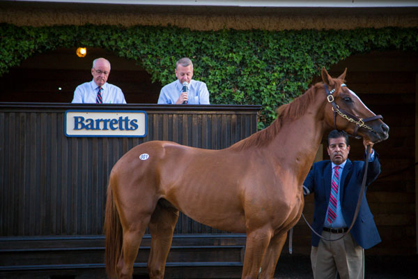 Barretts Paddock Sale
