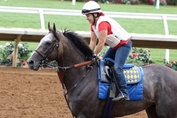 Horse of the World Arrogate Faces Five in TVG San Diego Handicap