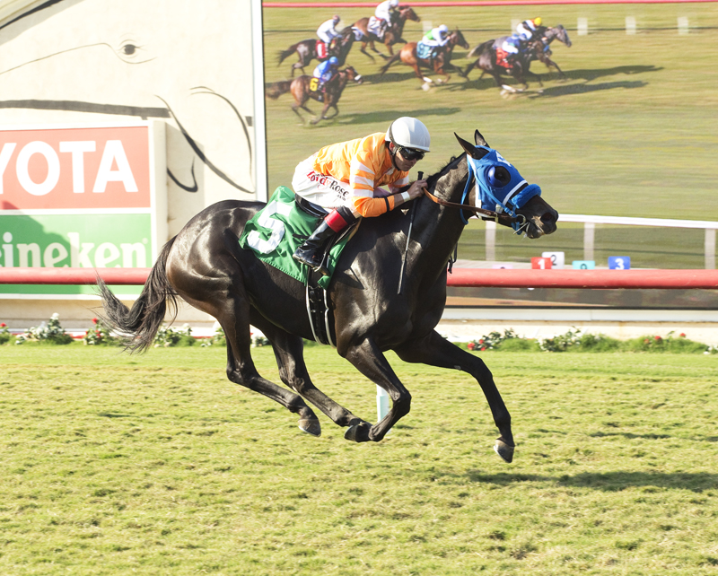 Cordiality Likely Favorite vs. Eight in Solana Beach Stakes