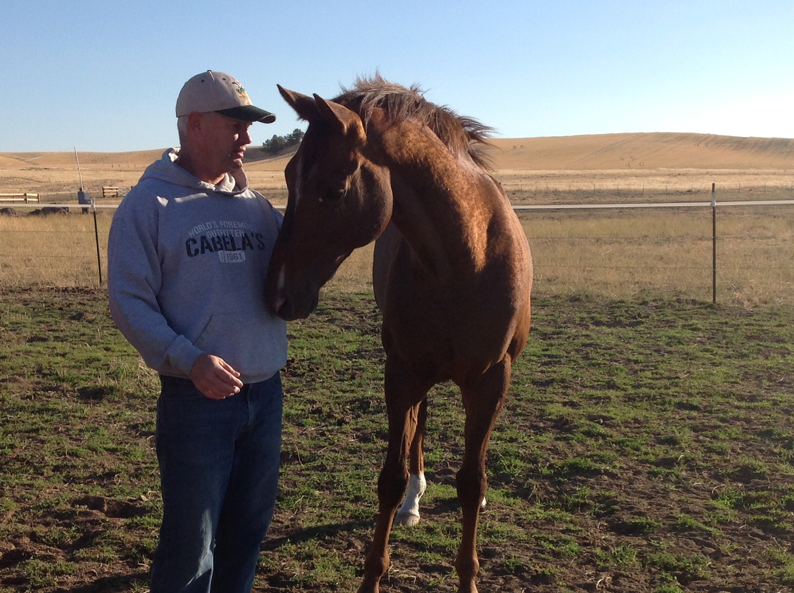 Down The Stretch Bond Between Horses Vets A Win For