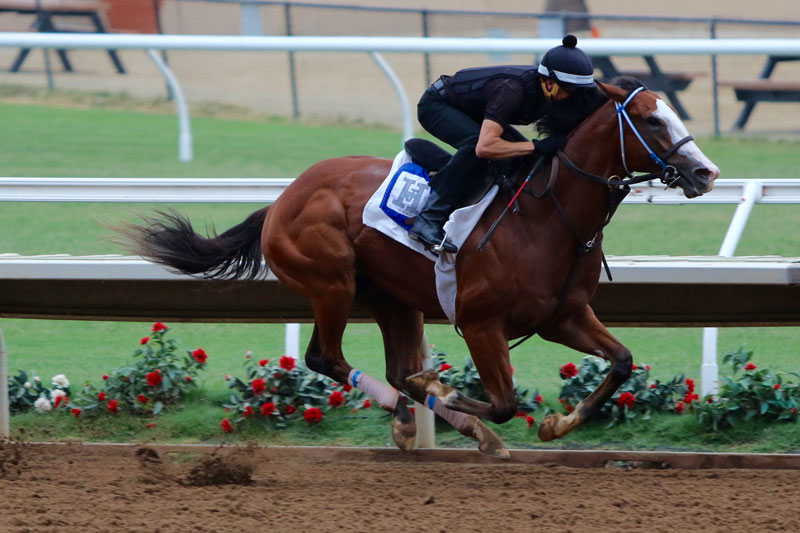 Instagrand Favored in Best Pal Stakes Saturday