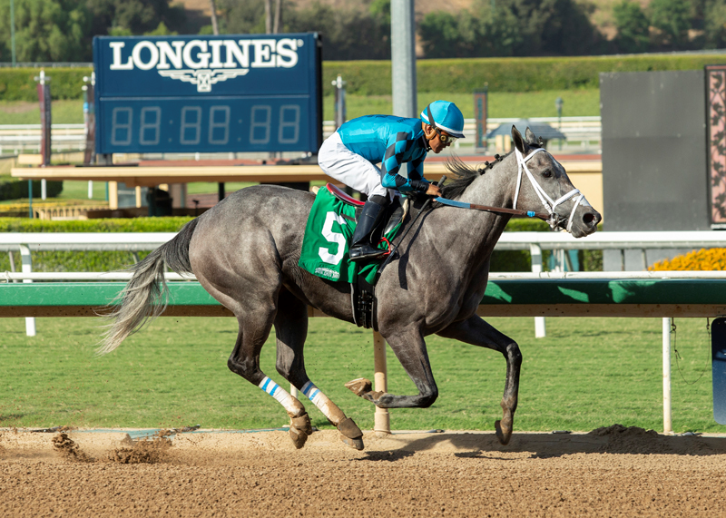Seven Cal-Bred Distaffers to Tangle in Betty Grable Stakes