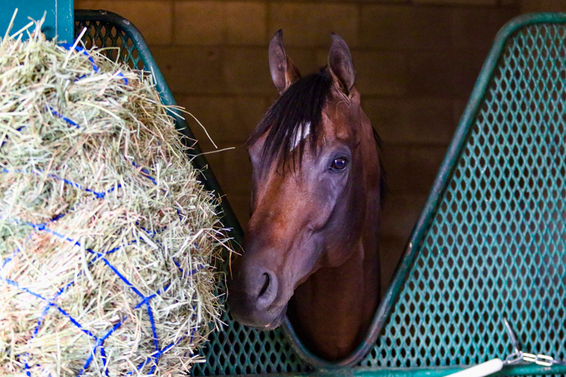 Stable Notes August 14, 2019