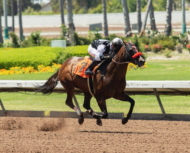 Race Within a Race Saturday in Smiling Tiger at Del Mar