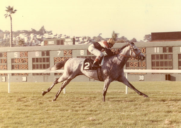 The Master of Glen Hill Loved His Time at Del Mar Best of All