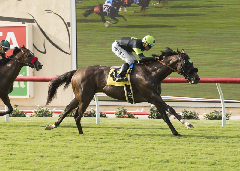 Bowies Hero Wins Opening-Day Oceanside Stakes