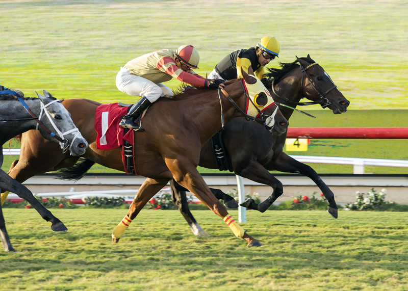 Tribalist Rallies to Win Green Flash Handicap