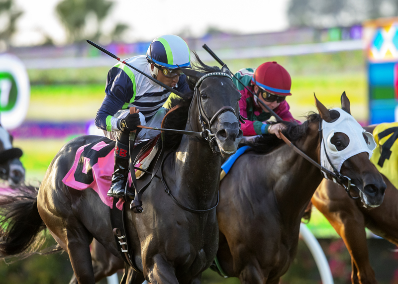 Lynne's Legacy Rallies to Win Solana Beach Stakes