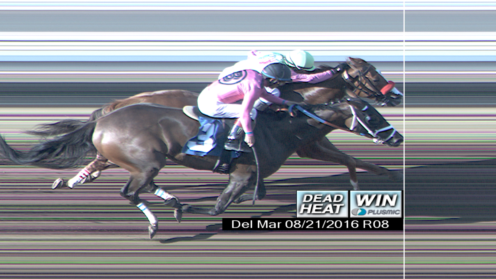 Dead-heat horse racing betting software non sports betting odds