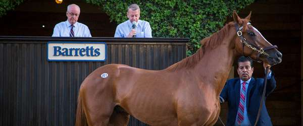 """Photo of """"Race Ready"""" Racehorse Sale at Del Mar Saturday, July 23"""