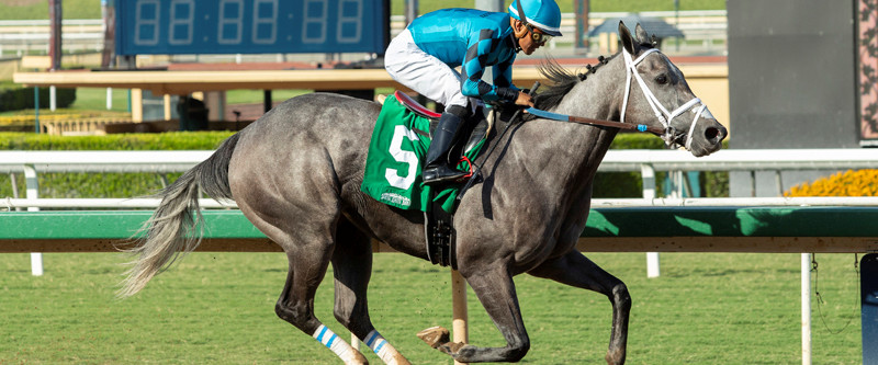 Photo of Seven Cal-Bred Distaffers to Tangle in Betty Grable Stakes