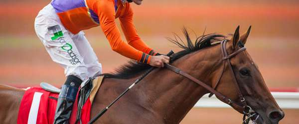 Photo of Stable Notes August 2 2015