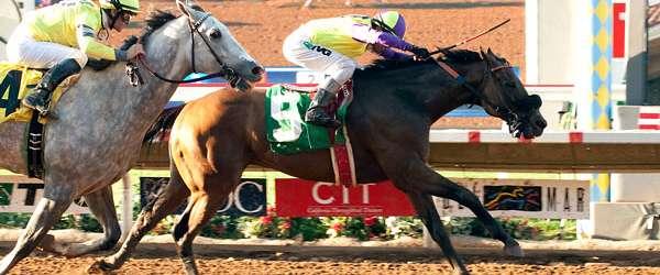 Photo of Big John B Wins Cougar II Handicap