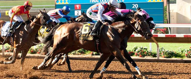 Photo of Stable Notes July 26 2015
