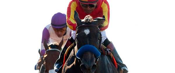 Photo of Pretty N Cool Scores in Sorrento Stakes