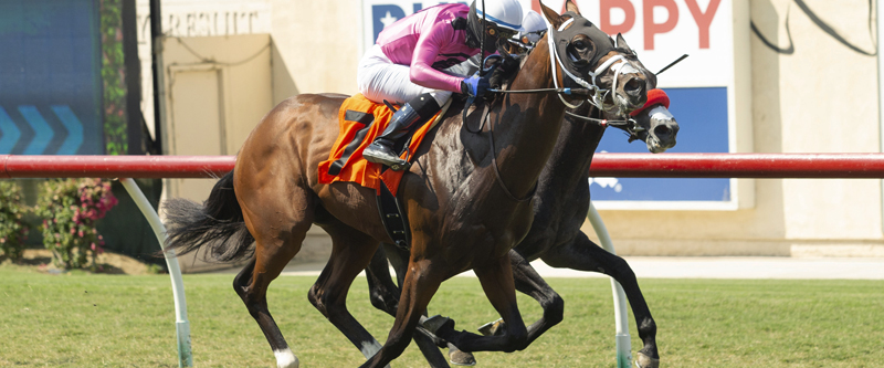 Photo of 13 Sign on for Monday's Del Mar Juvenile Turf
