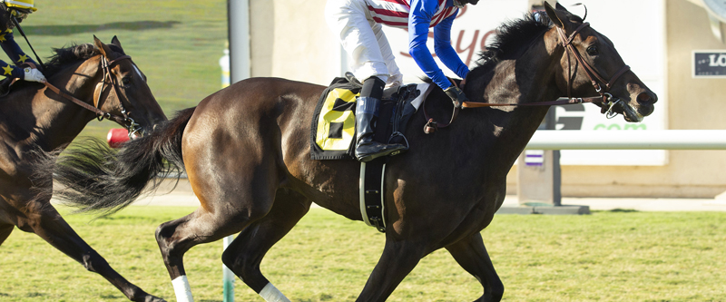 Photo of Del Mar Juvenile Fillies Turf Draws 11 for a Sunday Go