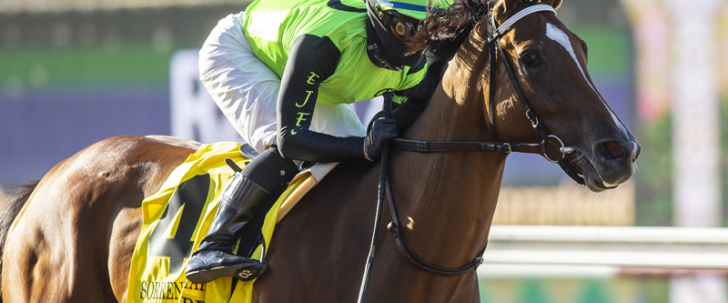 Photo of My Girl Red Handy Winner of Del Mar's Sorrento Stakes