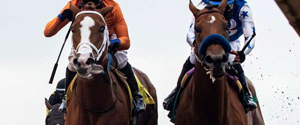 Photo of Dead-Heat for Win Friday in Tranquility Lake Stakes