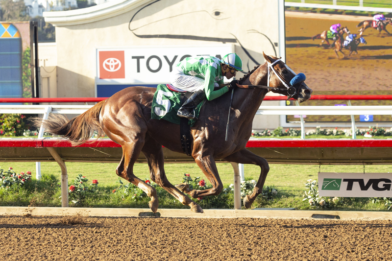 Photo of Fashionably Fast Favored in Cary Grant Stakes Sunday