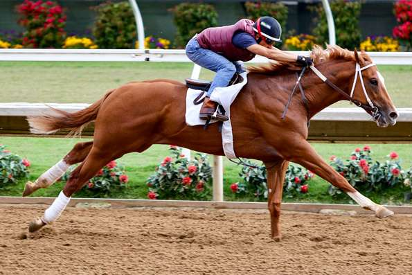Photo of Phantom Boss Favored in I'm Smokin Stakes Friday