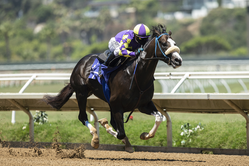 Photo of Honor A.P. in Sharp Ky Derby Drill at Del Mar Saturday