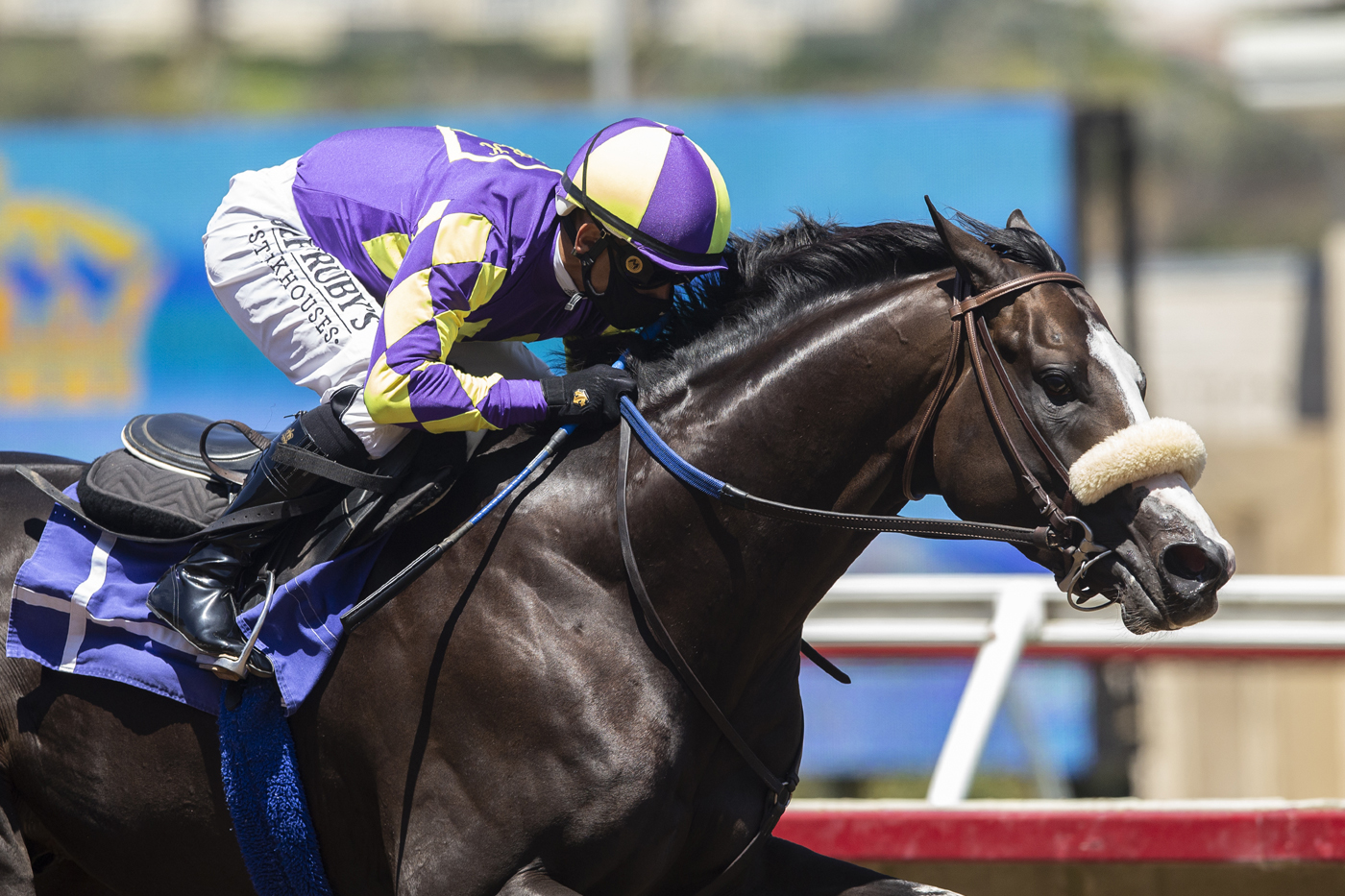 Photo of Honor A.P. in Final Derby Prep Saturday at Del Mar
