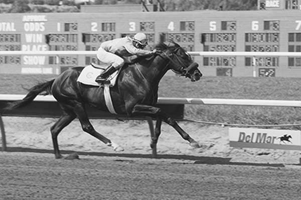 Photo of What a Workout! Sunday Silence's Day in the Del Mar Sun