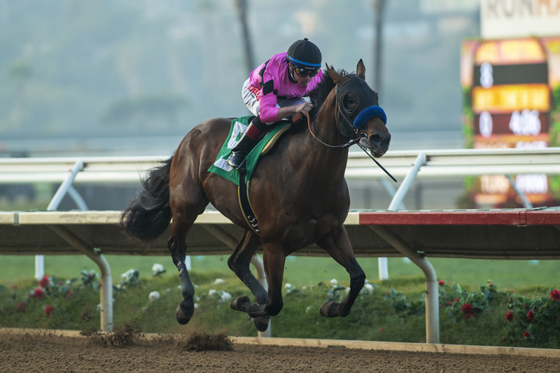 Photo of High Velocity Wins Bob Hope Stakes