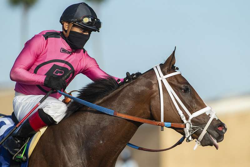 Photo of Grade I Del Mar Oaks has 11 in Saturday at Del Mar