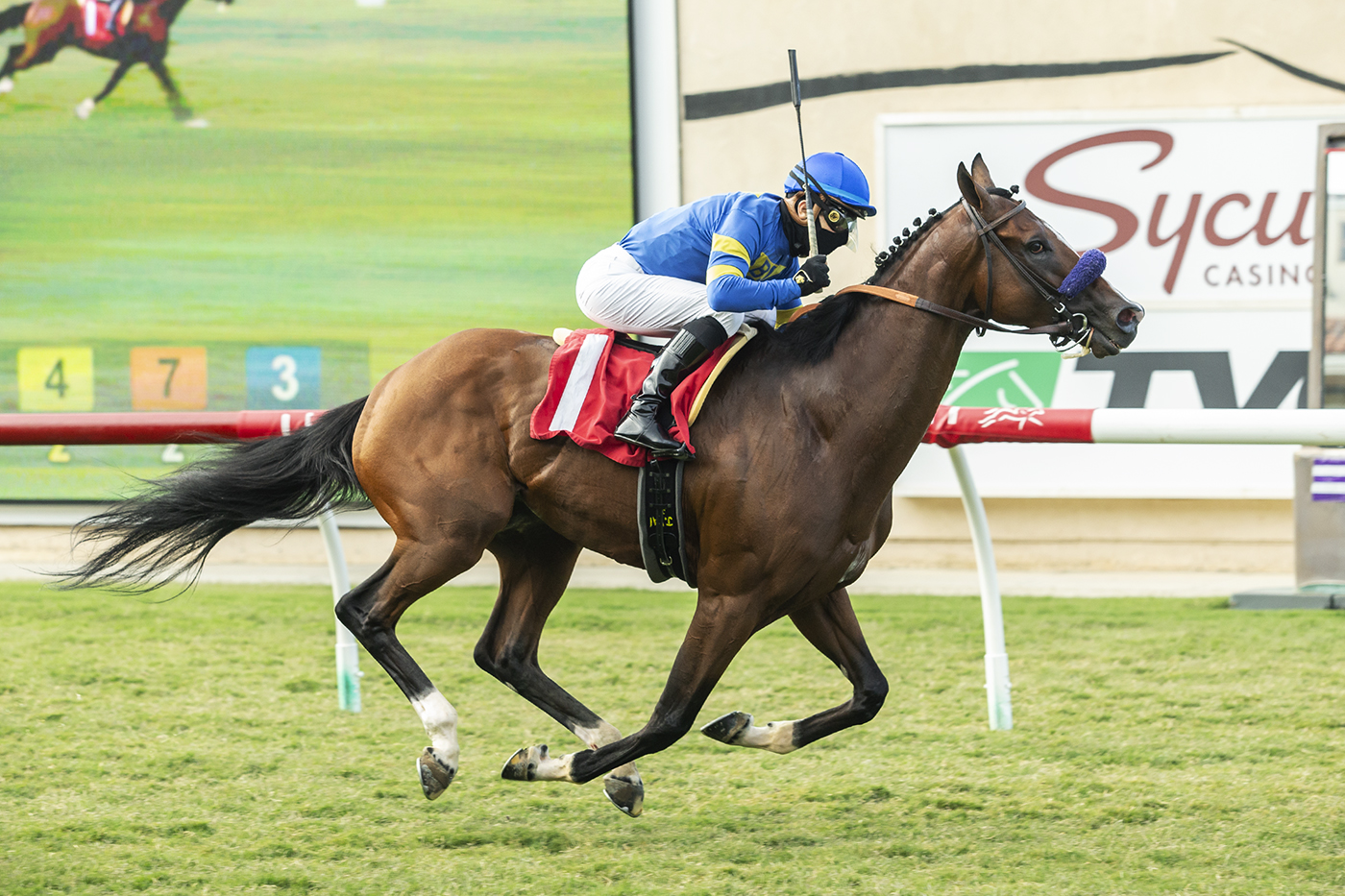 Photo of Order and Law Wire to Wire to Tally at Del Mar Monday