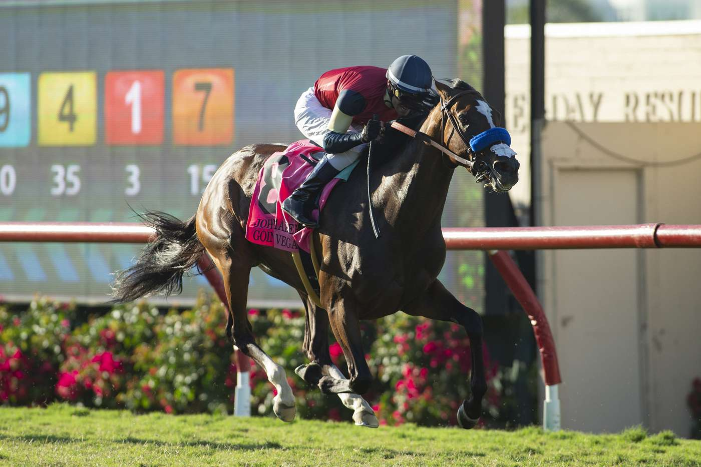 Photo of Going to Vegas Handy Winner of Saturday's Mabee at Del Mar