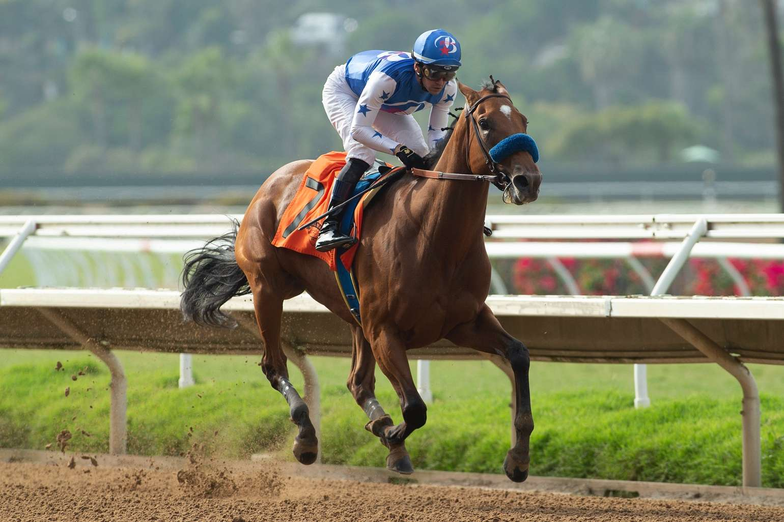 Photo of Private Mission Breezes in Saturday's Torrey Pines Stakes
