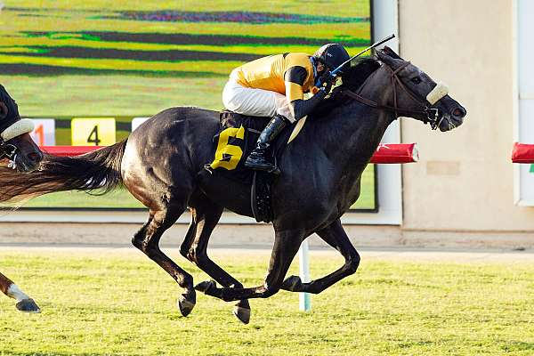 Photo of Lone Ticket Holder Cashes for $288,005 at Del Mar