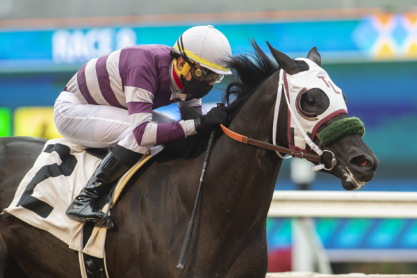 Photo of Governor Goteven Wins CTBA Stakes